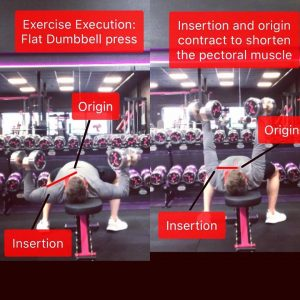 exercise_execution
