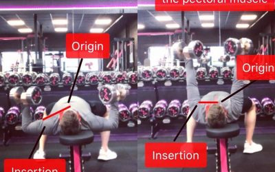 Exercise Execution For Hypertrophy: Flat Dumbbell Press