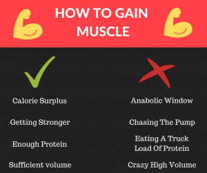 how_to_gain_muscle