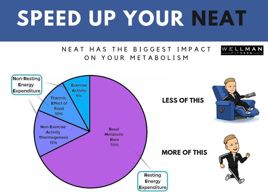 Want To Speed Up Your Metabolism? Speed Up Your NEAT